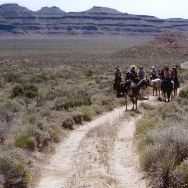 Horseback riders on a dirt trail with creosote and mountains.