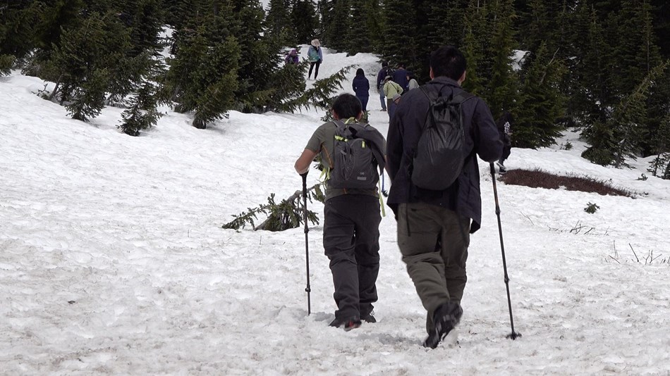 Two hikers with hiking poles and backpacks follow other hikers up a snow-covered slope.