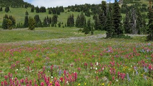 A meadow with colorful wildflowers