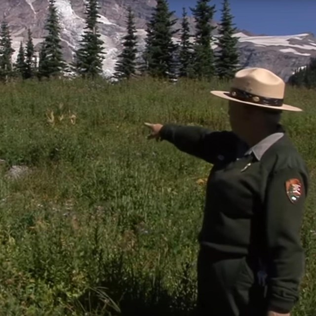 A ranger points at a wildflower meadow and Mount Rainier.
