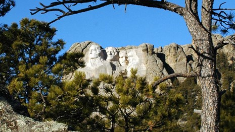 Photo of Mount Rushmore through a group of ponderosa pine trees.