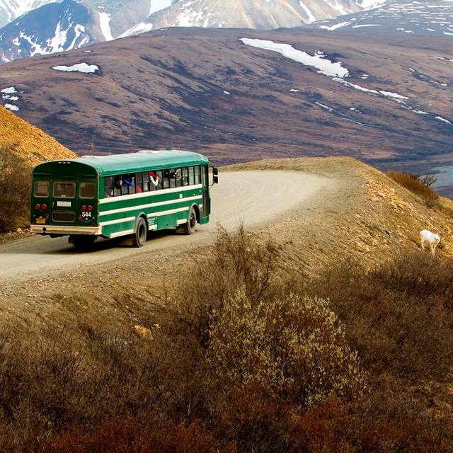 riders look at a dall sheep from the windows of a bus