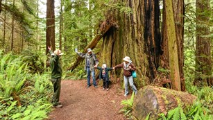A ranger stands with two adults and a child acting out the width of a redwood tree in the forest
