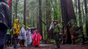 A ranger talks to a group of students on a rainy day in the forest