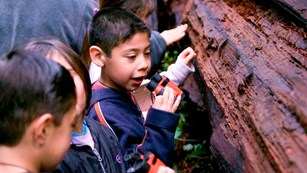 Children look closely at a redwood tree