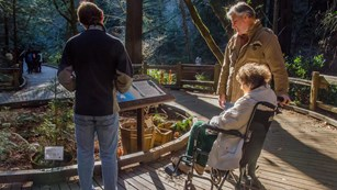 Woman in wheelchair on the boardwalk in the redwood forest
