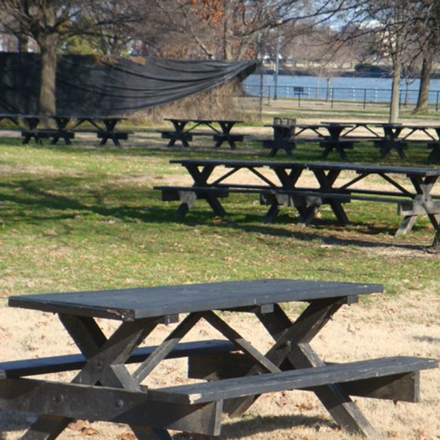 Several picnic tables under a tree in a park