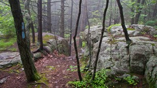 Trail leading through rocks and fog