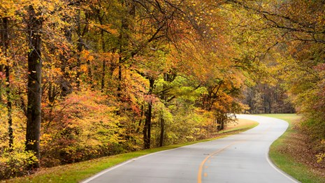 Roadway winds away from viewer. Trees line each side of road with leaves yellow and orange in fall.