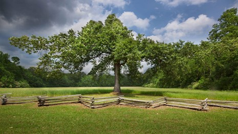 A tree stands at the edge of a farm field along a split-rail fence.