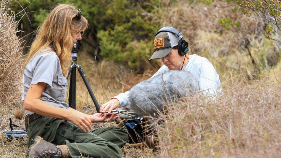 A ranger and a recording technician wearing headphones sits in tall grass.