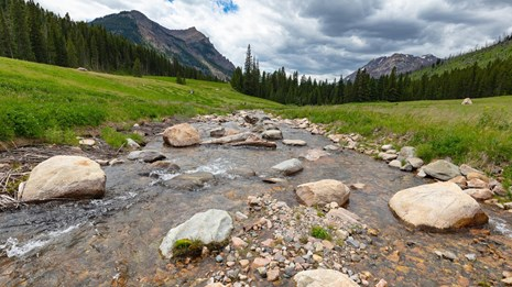 Clear, shallow, boulder-filled stream flanked by grassy meadow, forest, and mountains.