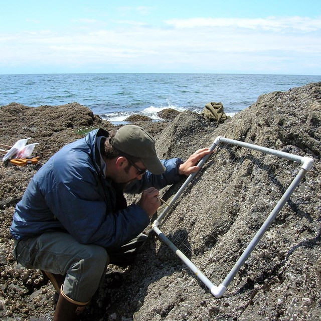person sampling intertidal community