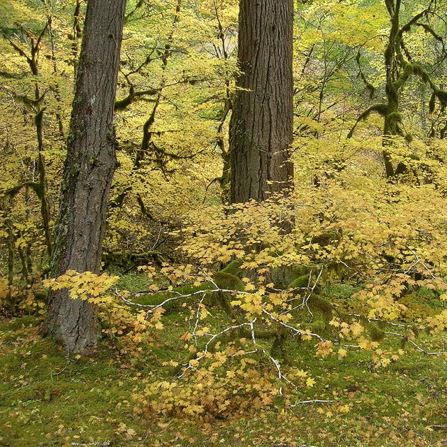 forest understory vegetation in fall color