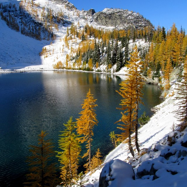 Lake with turning larches in the snow