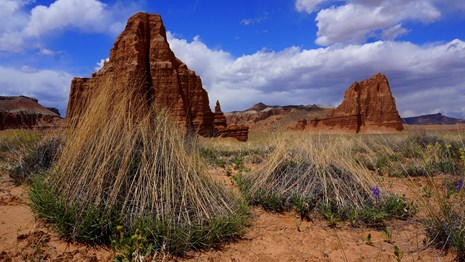Bunchgrass (foreground), with red rock formations and blue sky