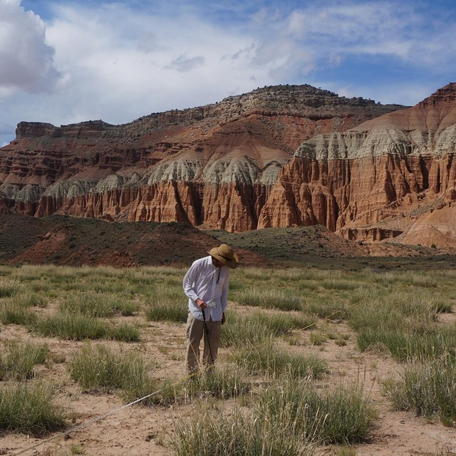 Man in hat takes a transect measurement in grassland, red rock wall in background