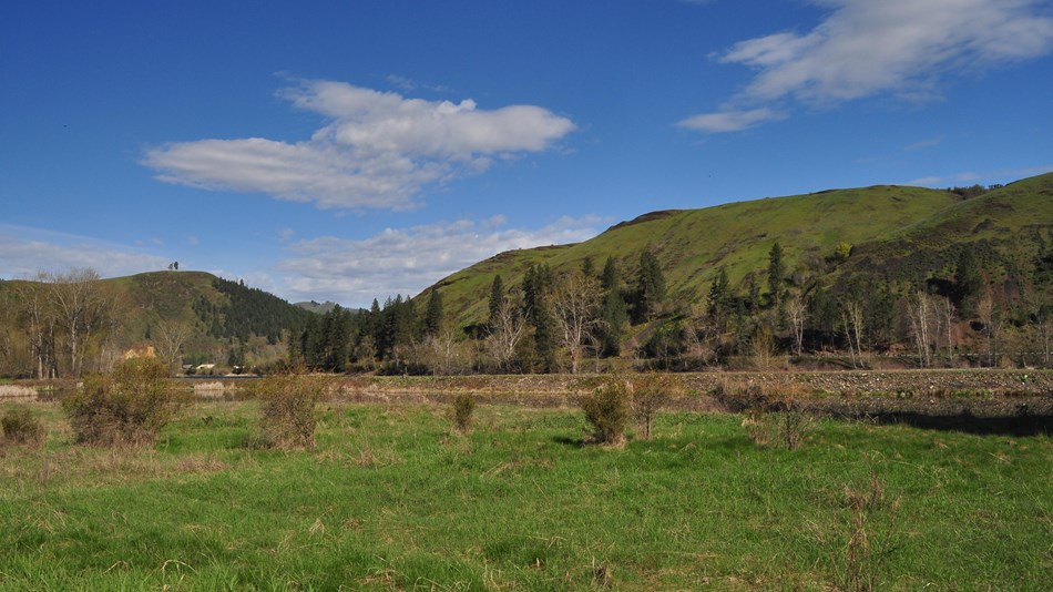 A grassy meadow with a few shrubs and the mountains in the background.