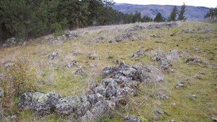 A grassy hillside filled with rocks.