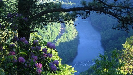 river and gorge with blooming rhododendrons