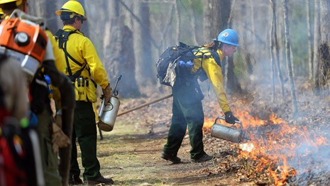 firefighter ignites a prescribed fire
