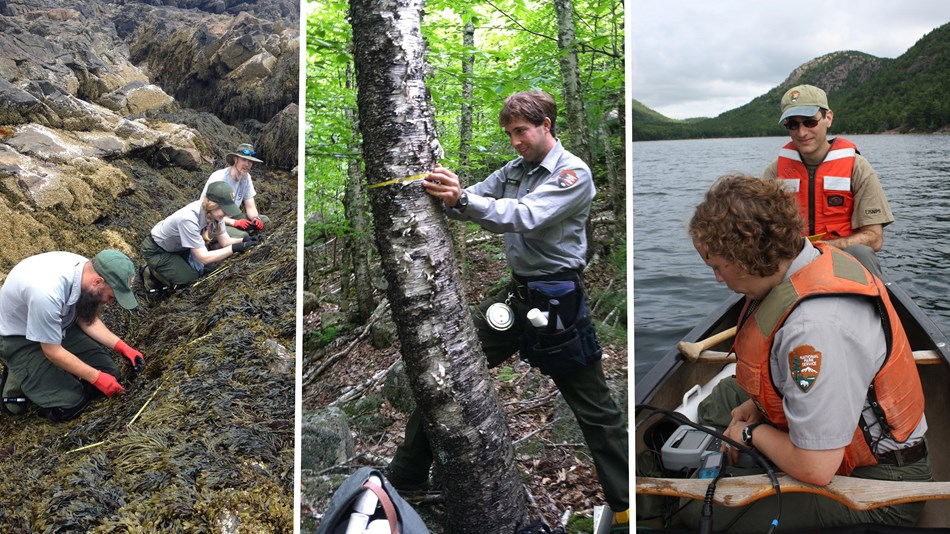 Monitoring methods in coastal, forest, and lake communities in NETN parks