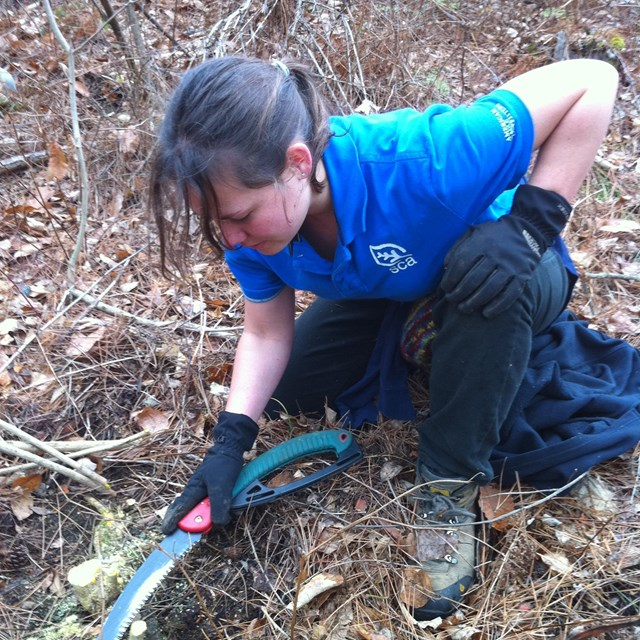 SCA intern removes an inasive plant. NPS photo.