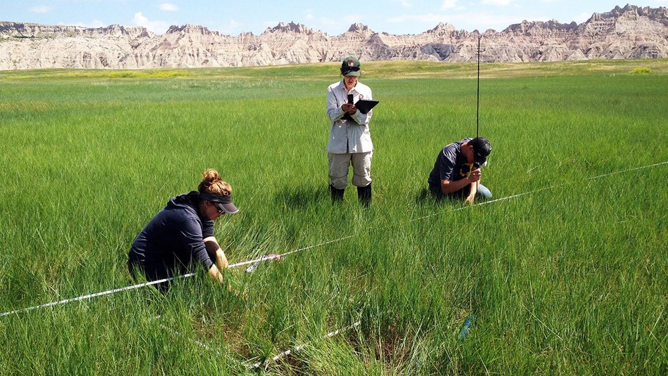 two biologists crouch in a wide grassy plain looking at plants, a third holds a clipboard