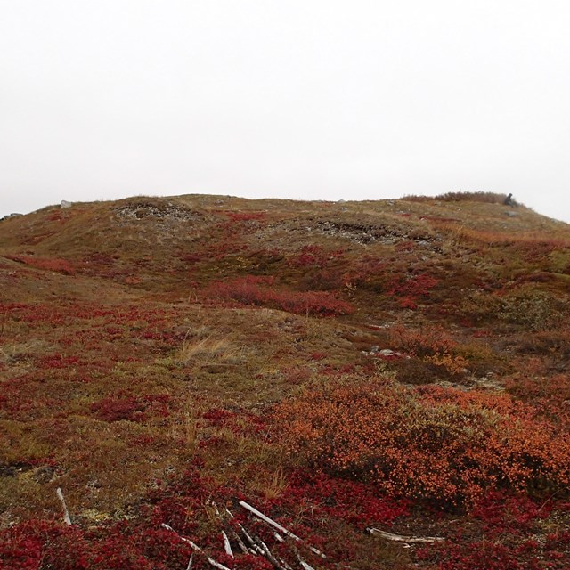 Hill with covered in red tundra leaves where Gallagher Flint Station Archeological site is located