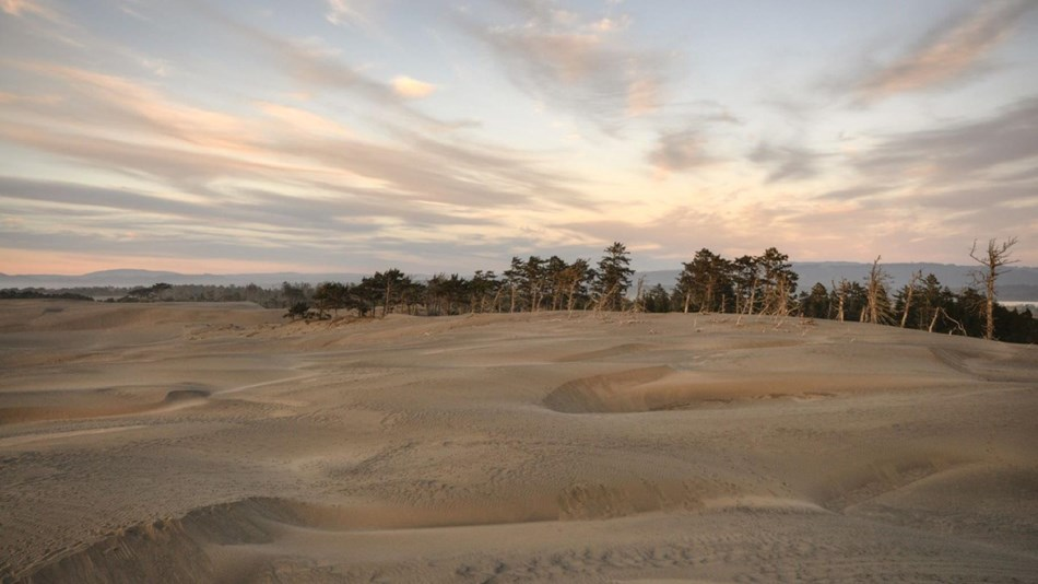 View of sand dunes in foreground and trees in background