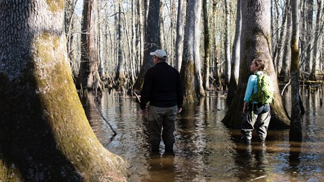 a man and a woman wading in a swamp surrounded by large cypress trees