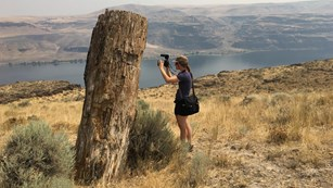 person with camera next to fossil tree