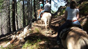 Three riders on horseback along a forested trail.