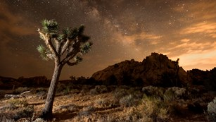 Night sky over a Joshua tree