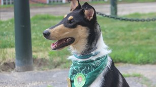 Dog wearing a BARK Ranger handkerchief