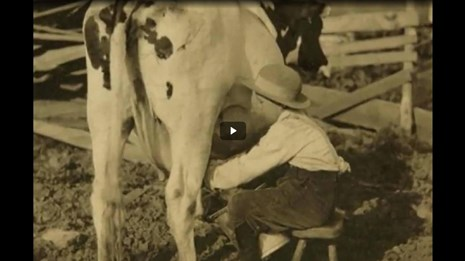 Screenshot of a black and white image of a kid milking a cow