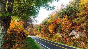 Road through a forest with fall colors