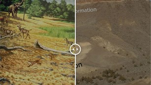 Illustration of prehistoric creatures next to a photo of a desert landscape
