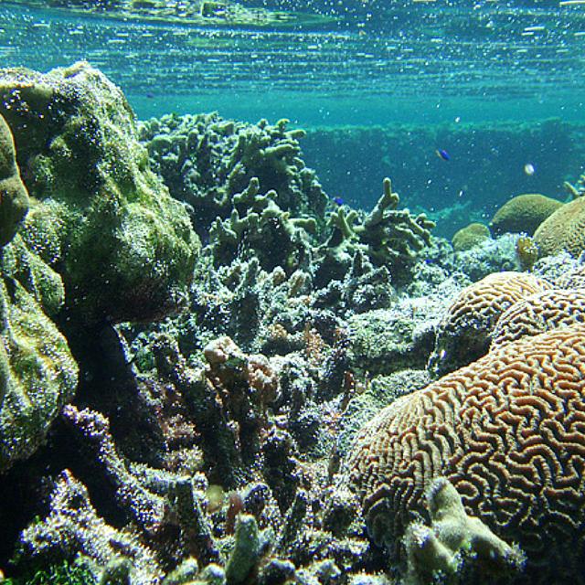 Ocean Habitats - Oceans, Coasts & Seashores (U S  National