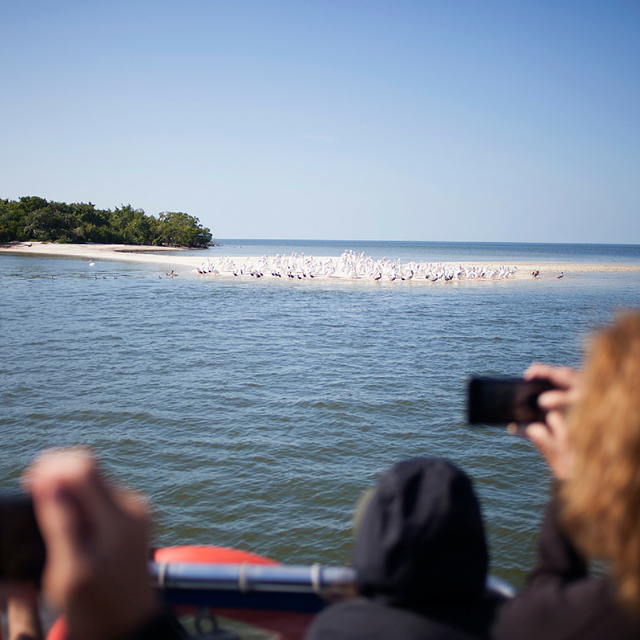 people look at florida bay at everglades national park