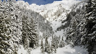 Snowy mountain scene with fir trees