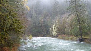 Mist over Skokomish River at Staircase.