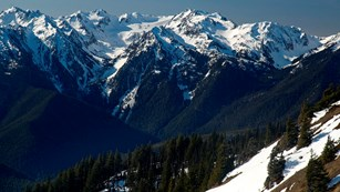 Baily Range and Mt. Olympus can be seen from Hurricane Ridge.