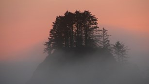 Fog gathers around a clump of trees during sunset.