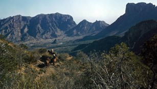 Horseriders follow the Laguna Meadow Trail towards the Chisos Basin, Big Bend, in the 1940s.