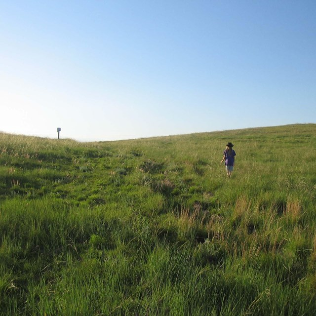 A person walks up a grassy swale under a blue sky.