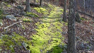 a moss hiking trail head through the woods.