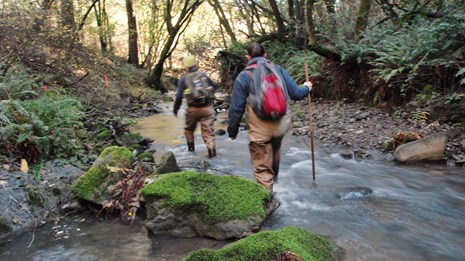 Two people hiking through a creek on a coho spawner survey
