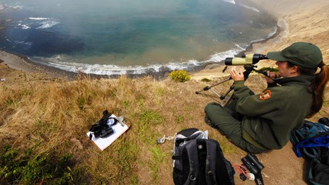 National Park Service biologist looking at harbor seals through a scope