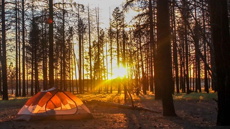 The sun setting behind a glowing tent in a ponderosa forest.